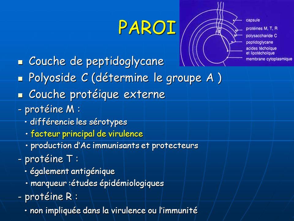 PAROI Couche de peptidoglycane Couche de peptidoglycane Polyoside C (détermine le groupe A ) Polyoside C (détermine le groupe A ) Couche protéique ext