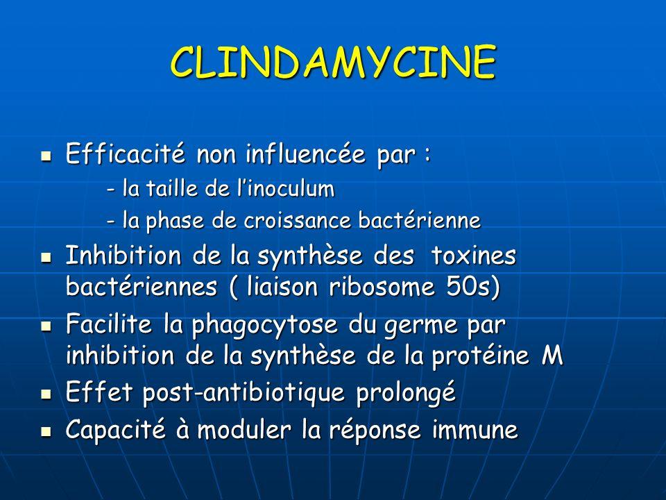 CLINDAMYCINE Efficacité non influencée par : Efficacité non influencée par : - la taille de linoculum - la taille de linoculum - la phase de croissanc