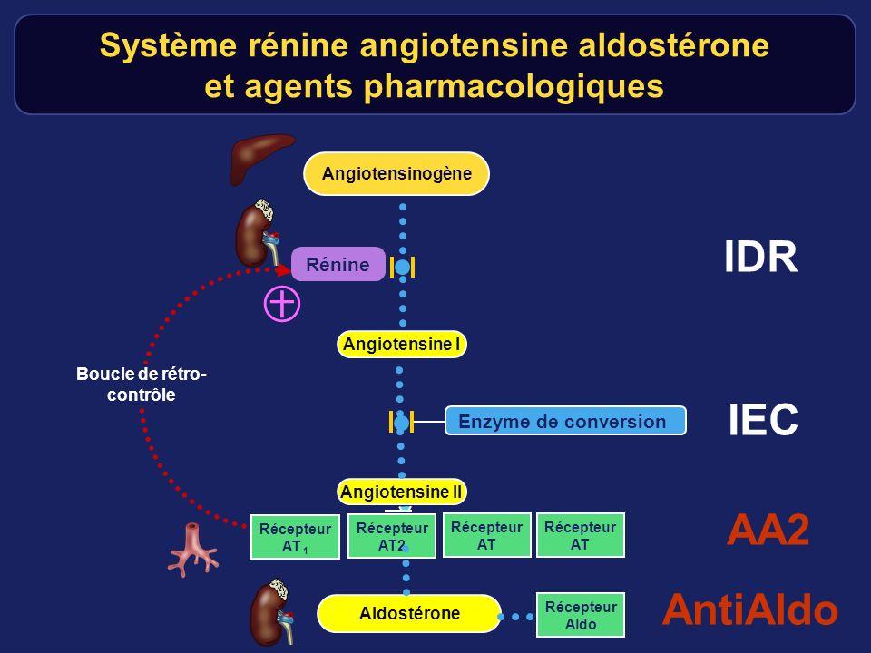 Récepteur AT 1 Rénine Angiotensinogène Angiotensine II Boucle de rétro- contrôle Récepteur AT2 Récepteur AT Récepteur AT Système rénine angiotensine a