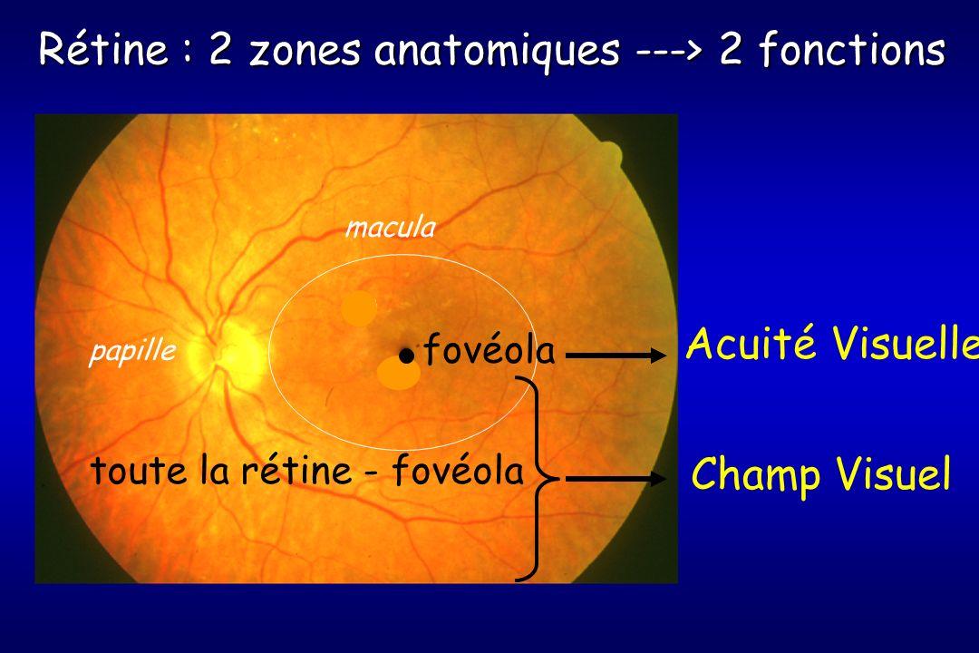 Acuité Visuelle Rétine : 2 zones anatomiques ---> 2 fonctions Champ Visuel macula papille fovéola toute la rétine - fovéola