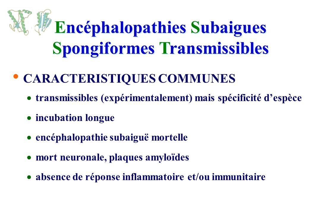 vMCJ : Septembre 2005, France : 14 cas (dont 2 + 2donneurs de sang (cas 8 et 9) !)