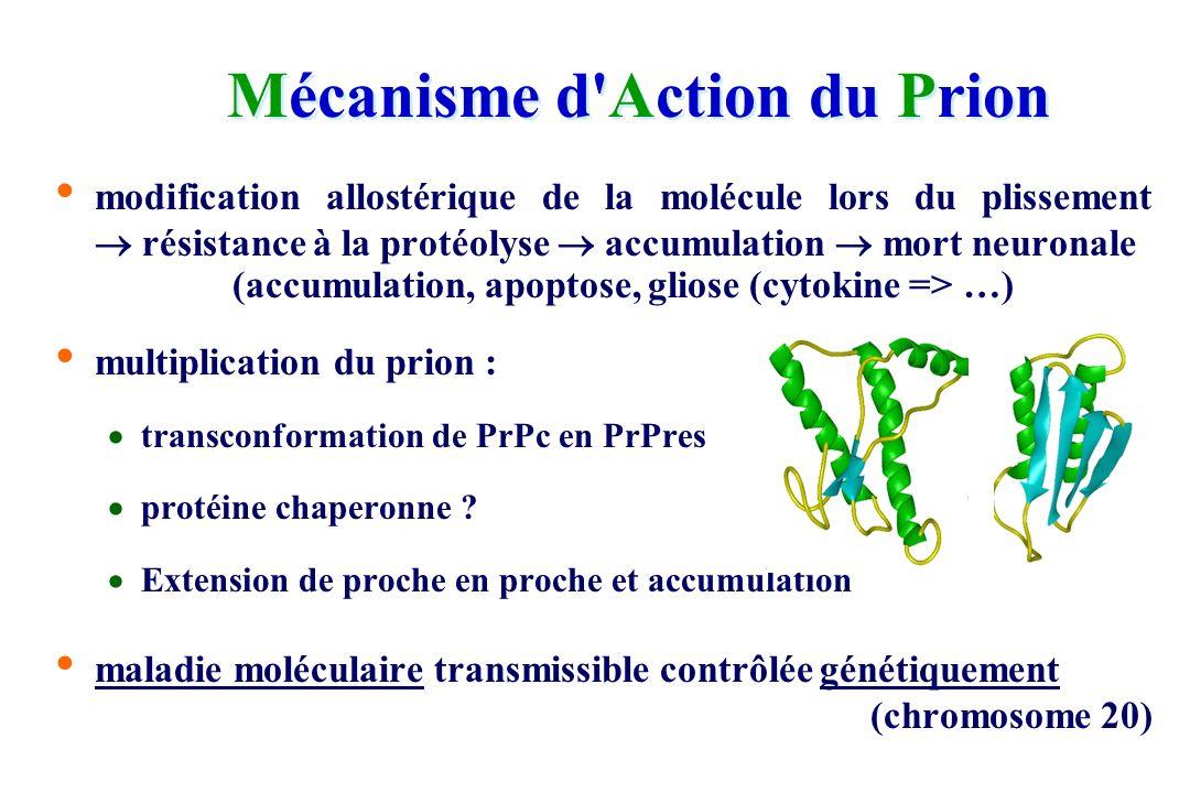 Propriétés et Nature des ATNC NATURE : le prion
