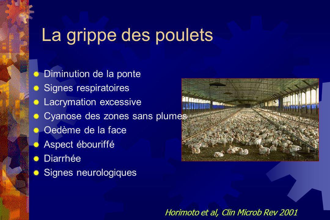 La grippe des poulets Diminution de la ponte Signes respiratoires Lacrymation excessive Cyanose des zones sans plumes Oedème de la face Aspect ébourif