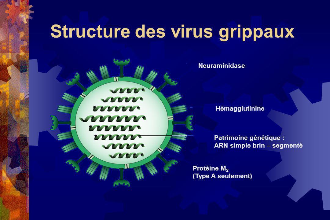 Neuraminidase Hémagglutinine Patrimoine génétique : ARN simple brin – segmenté Protéine M 2 (Type A seulement) Structure des virus grippaux