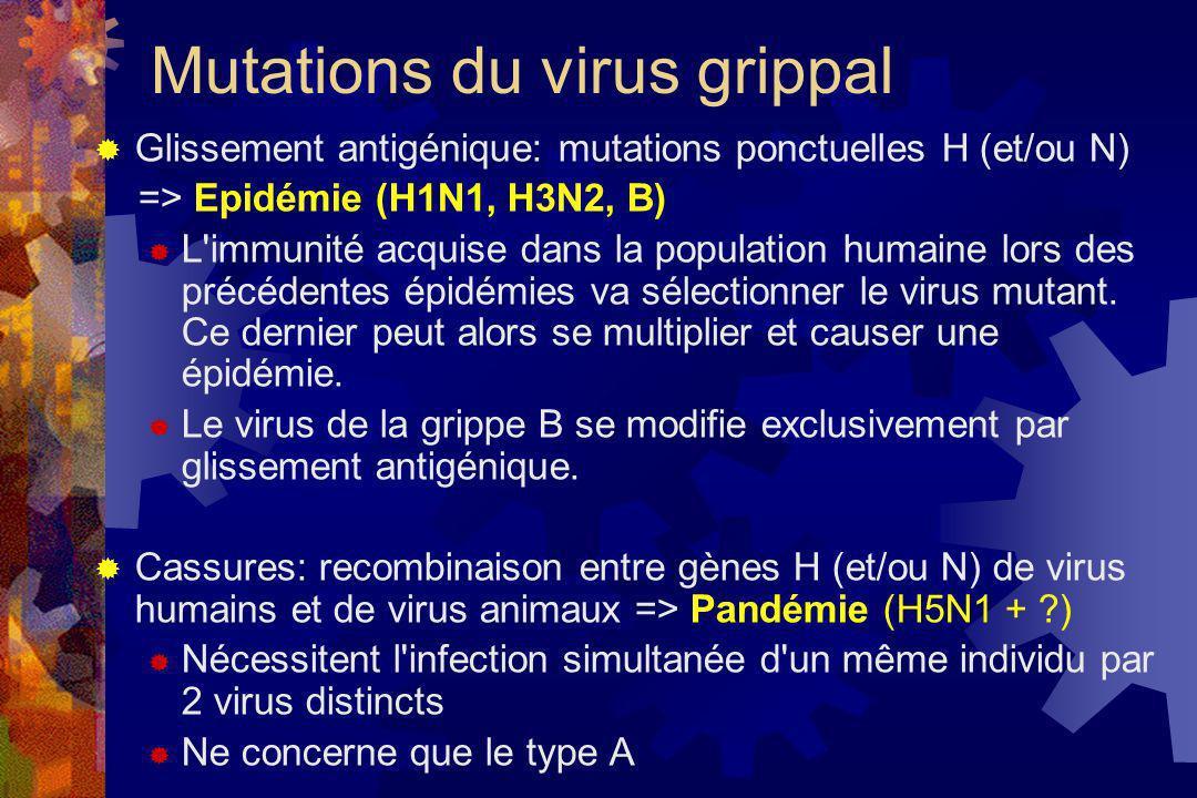 Mutations du virus grippal Glissement antigénique: mutations ponctuelles H (et/ou N) => Epidémie (H1N1, H3N2, B) L'immunité acquise dans la population
