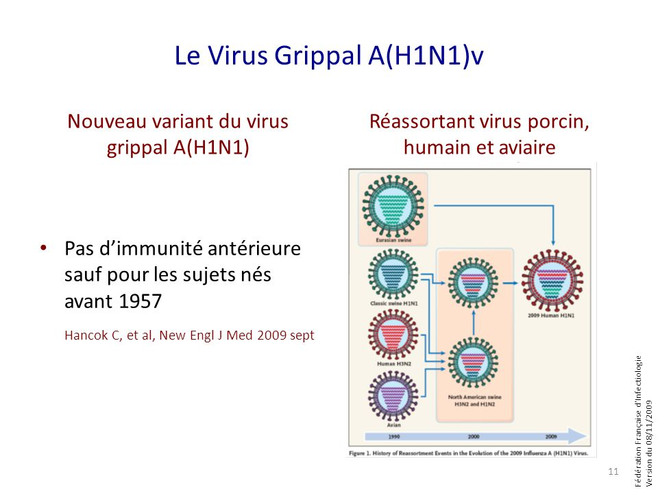 Fédération Française dInfectiologie Version du 08/11/2009 Le Virus Grippal A(H1N1)v Nouveau variant du virus grippal A(H1N1) Pas dimmunité antérieure