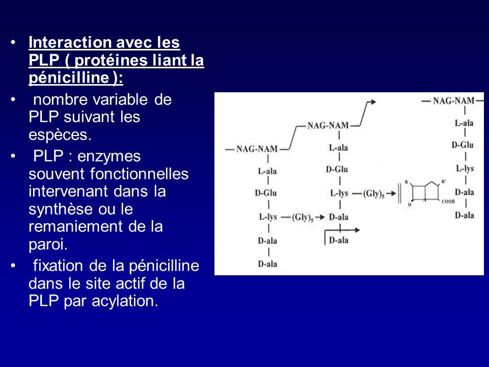 Les enzymes bactériennes vont donc intervenir pour lier D-Ala à DAP Ce sont des transpeptidases et des transglycosylases Ce sont elles qui sont la cib
