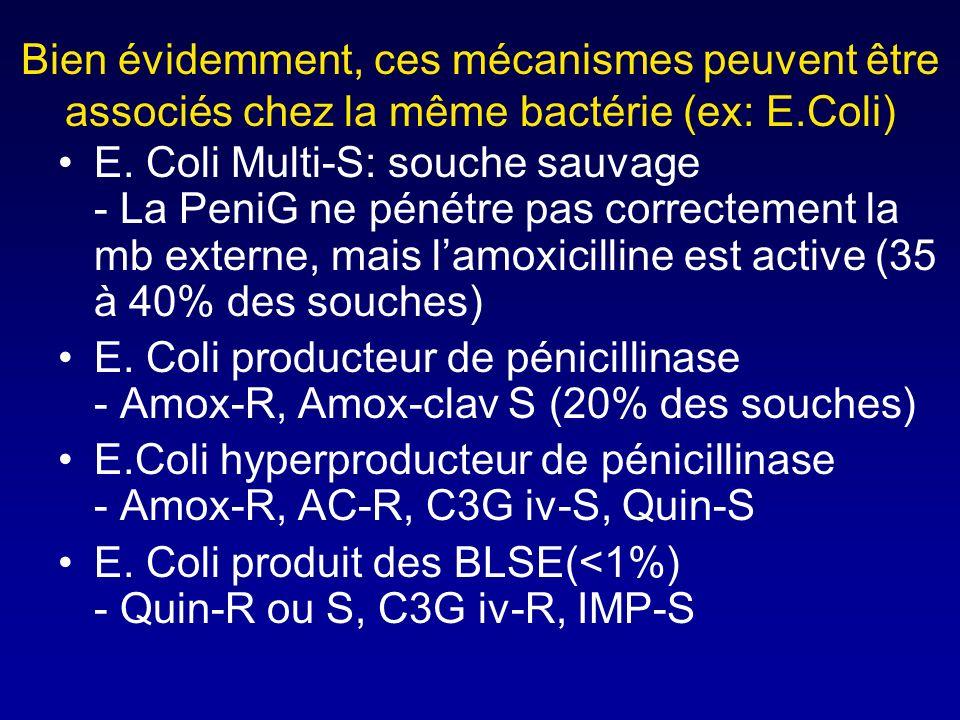 Phénomène defflux actif Cest un des mécanismes mis en jeu par Pseudomonas aeruginosa pour se débarasser des molécules de béta- lactamines ayant franch