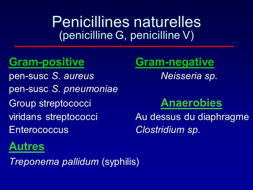 Peni G et Peni V obtenus par fermentation de Penicilinium chrysogenum Linterposition dun atome dO permet labsorbtion digestive Spectre: - Streptocoque