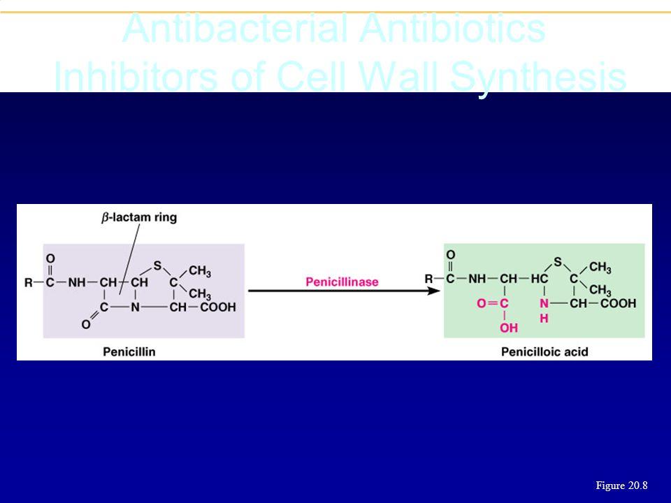 Inhibiteurs de bétalactamases Acide clavulaniqueTazobactamSulbactam+ AmoxicillinePipéracilline= Amoxi-clavPiper-tazo (Augmentin)(Tazocilline) + Ticarc