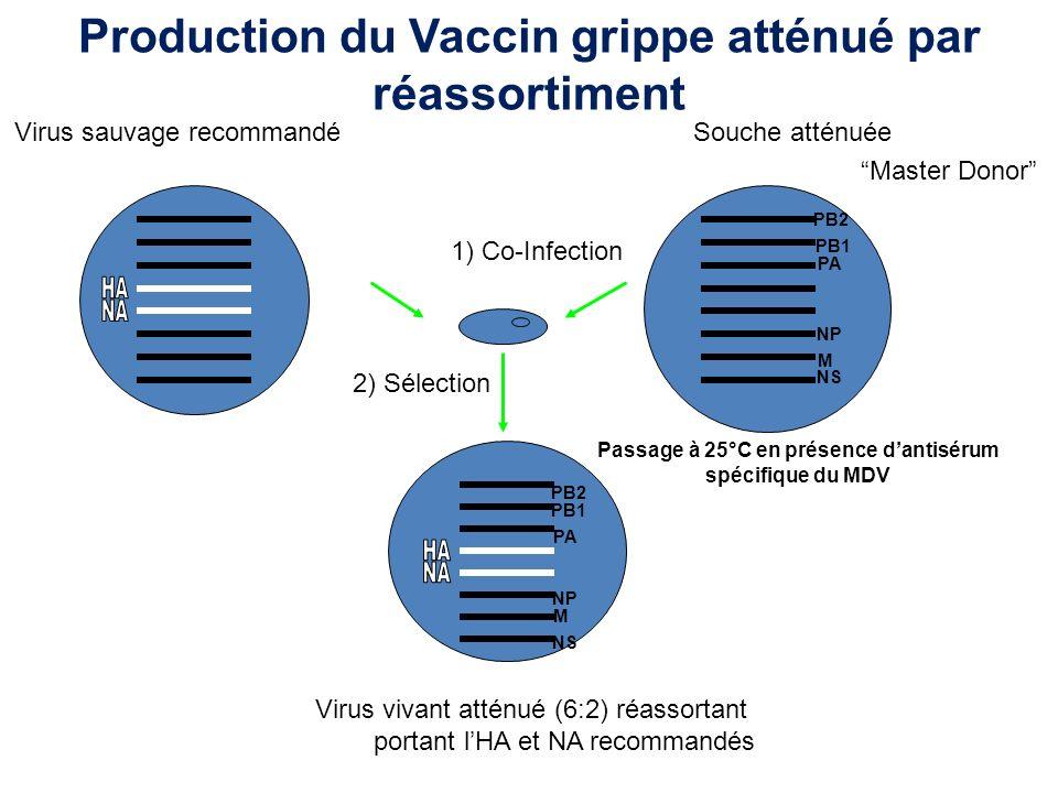 Réponse primaire à une infection Charge virale Cellules cytotoxiques CD8+ AC neutralisants