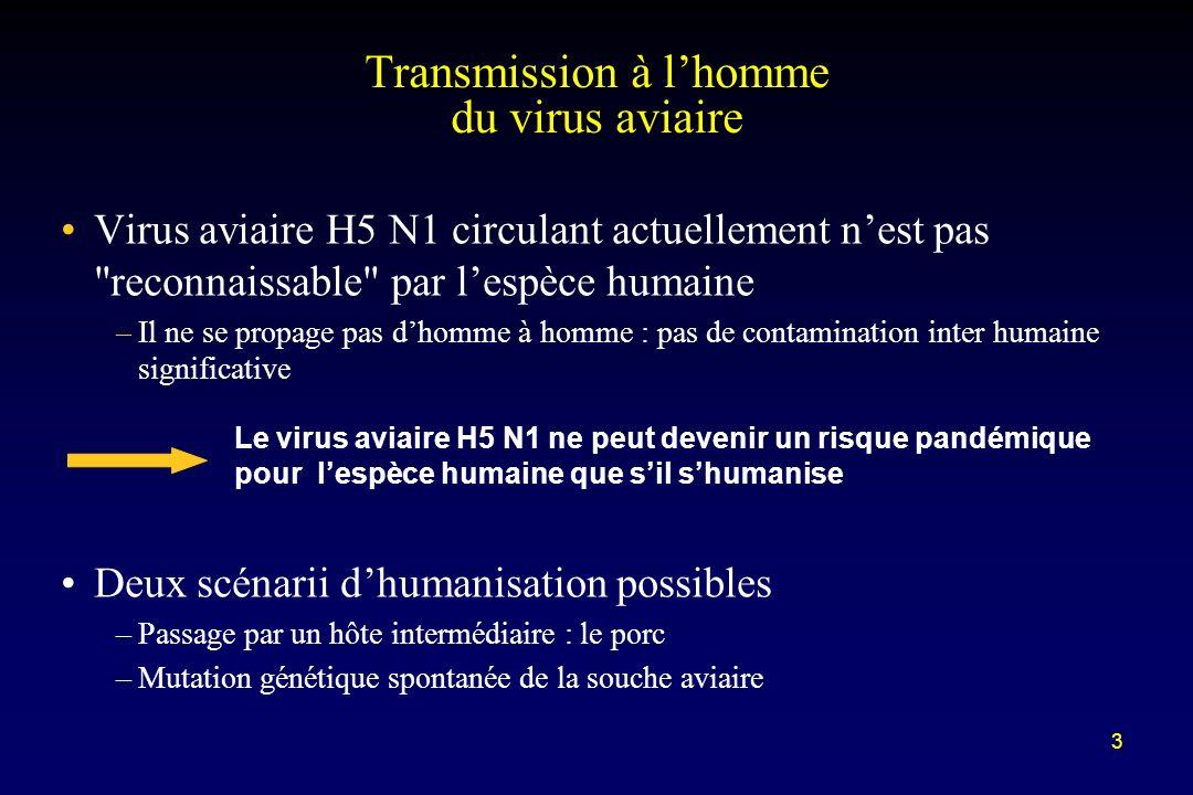 3 Virus aviaire H5 N1 circulant actuellement nest pas