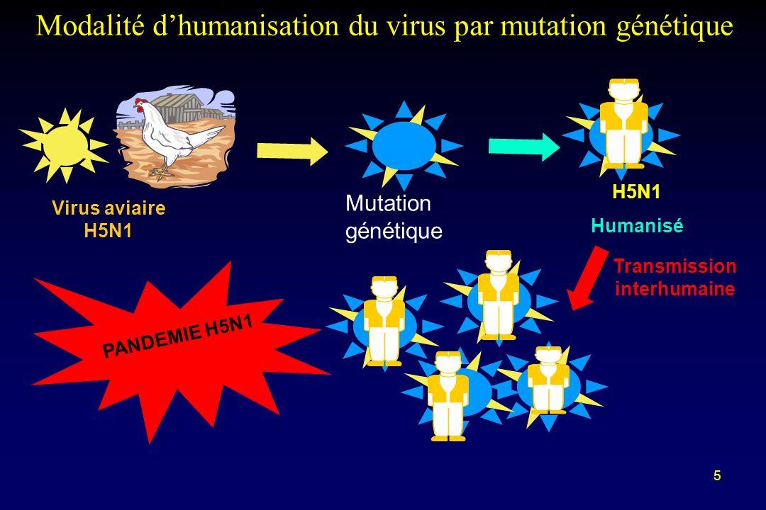 5 H5N1 Humanisé PANDEMIE H5N1 Virus aviaire H5N1 Mutation génétique Transmission interhumaine Modalité dhumanisation du virus par mutation génétique