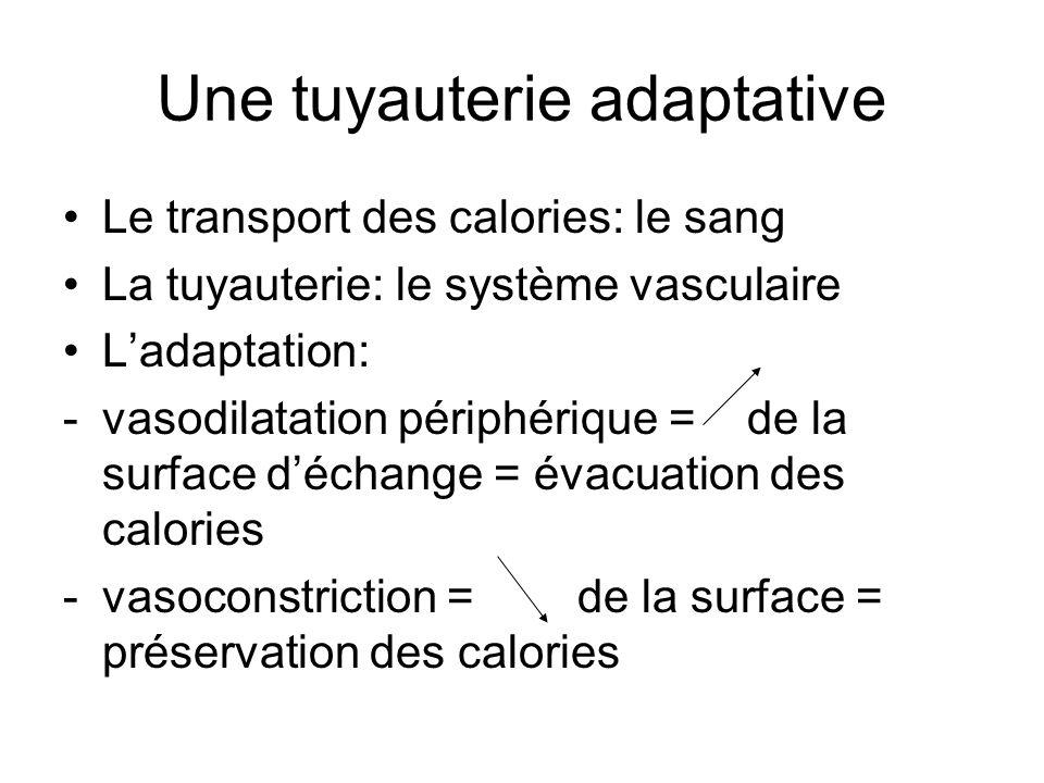 Une tuyauterie adaptative Le transport des calories: le sang La tuyauterie: le système vasculaire Ladaptation: -vasodilatation périphérique = de la su