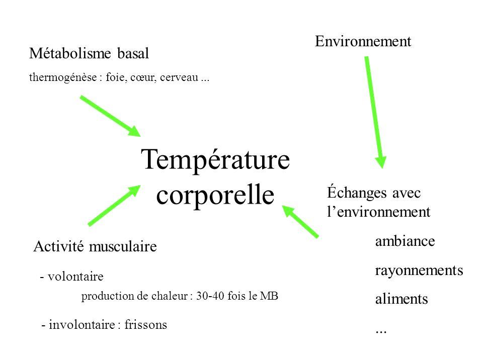 Métabolisme basal thermogénèse : foie, cœur, cerveau... Activité musculaire - volontaire production de chaleur : 30-40 fois le MB - involontaire : fri