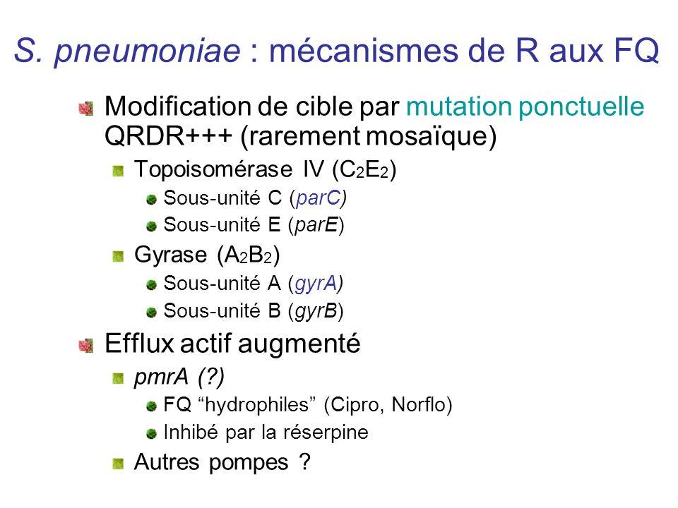 S. pneumoniae : mécanismes de R aux FQ Modification de cible par mutation ponctuelle QRDR+++ (rarement mosaïque) Topoisomérase IV (C 2 E 2 ) Sous-unit