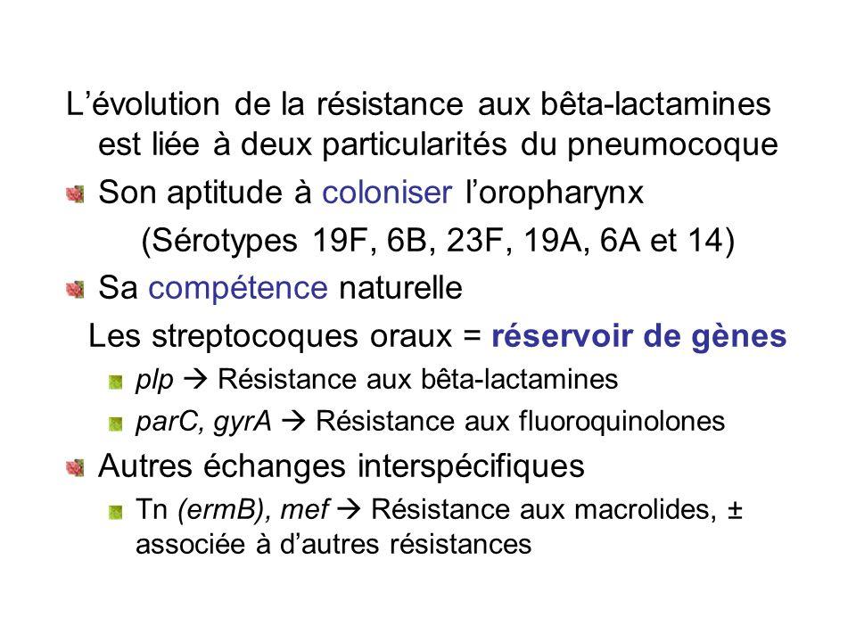 Lévolution de la résistance aux bêta-lactamines est liée à deux particularités du pneumocoque Son aptitude à coloniser loropharynx (Sérotypes 19F, 6B,