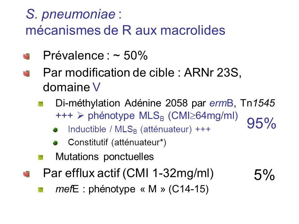 S. pneumoniae : mécanismes de R aux macrolides Prévalence : ~ 50% Par modification de cible : ARNr 23S, domaine V Di-méthylation Adénine 2058 par ermB