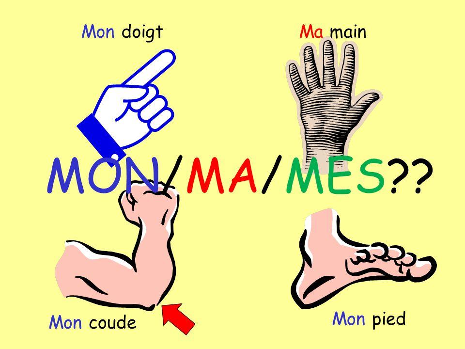 Mon doigtMa main Mon coude Mon pied MON/MA/MES