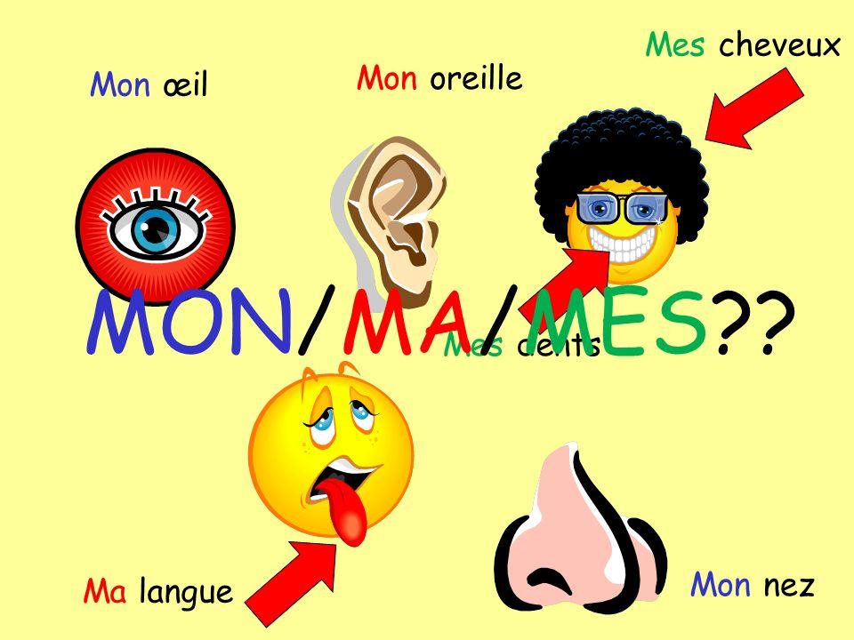 Mon œil Mon oreille Mes dents Mes cheveux Ma langue Mon nez MON/MA/MES