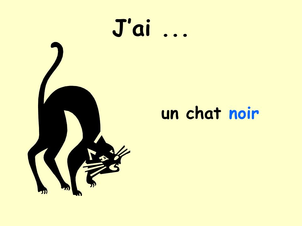 Jai... un chat noir