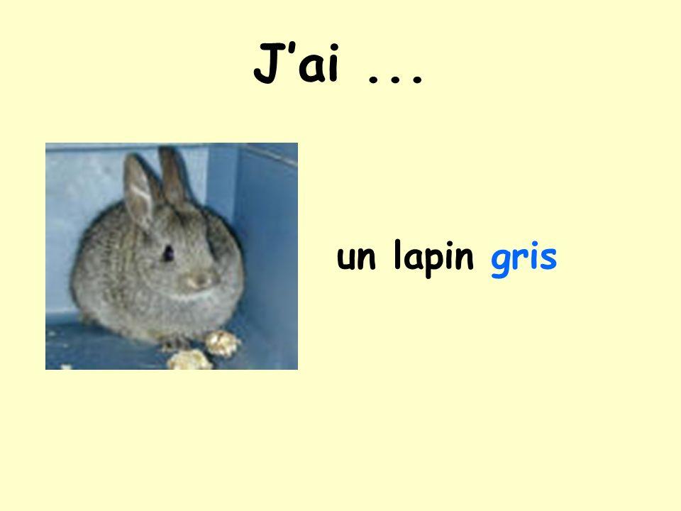 Jai... un lapin blanc