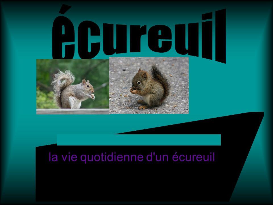 la vie quotidienne d'un écureuil