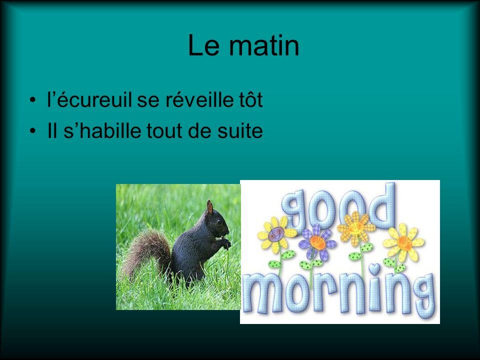 Le matin lécureuil se réveille tôt Il shabille tout de suite