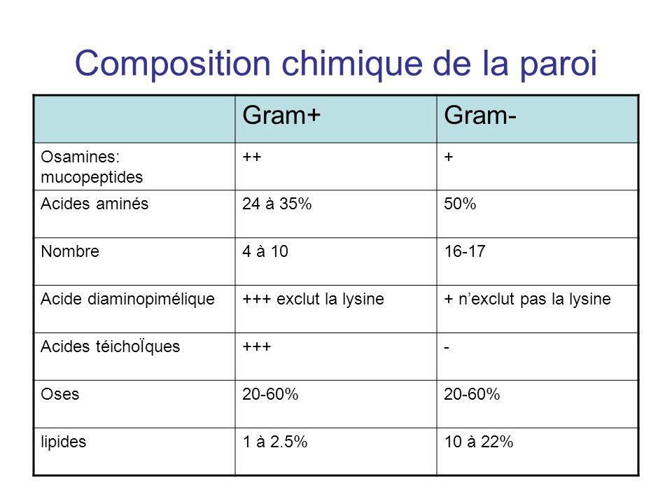 Composition chimique de la paroi Gram+Gram- Osamines: mucopeptides +++ Acides aminés24 à 35%50% Nombre4 à 1016-17 Acide diaminopimélique+++ exclut la lysine+ nexclut pas la lysine Acides téichoÏques+++- Oses20-60% lipides1 à 2.5%10 à 22%