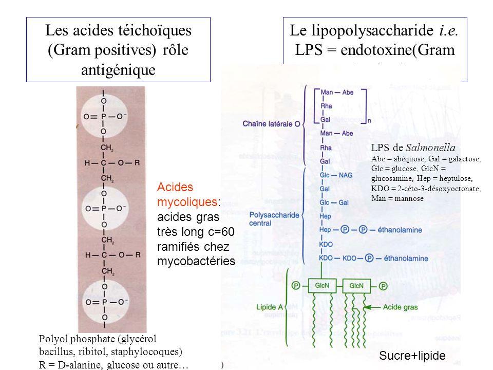 Les acides téichoïques (Gram positives) rôle antigénique Le lipopolysaccharide i.e.