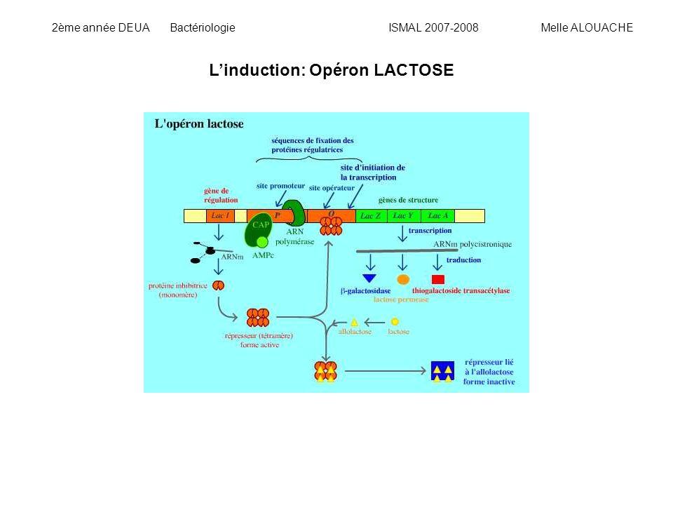Linduction: Opéron LACTOSE 2ème année DEUA Bactériologie ISMAL 2007-2008 Melle ALOUACHE