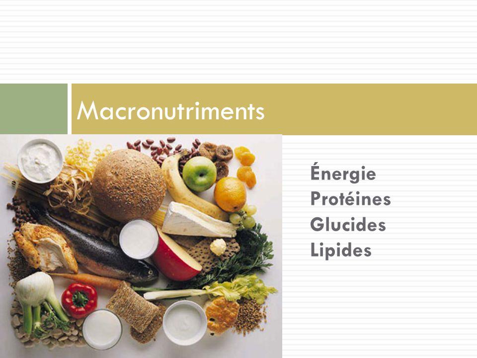 Macronutriments Énergie Protéines Glucides Lipides