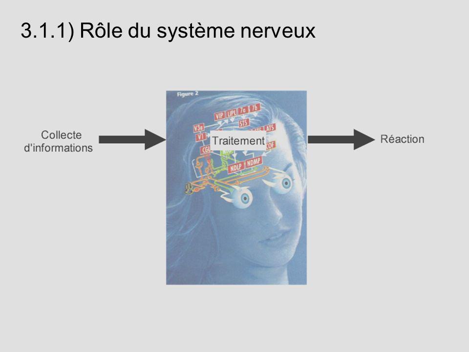 3.1.1) Rôle du système nerveux