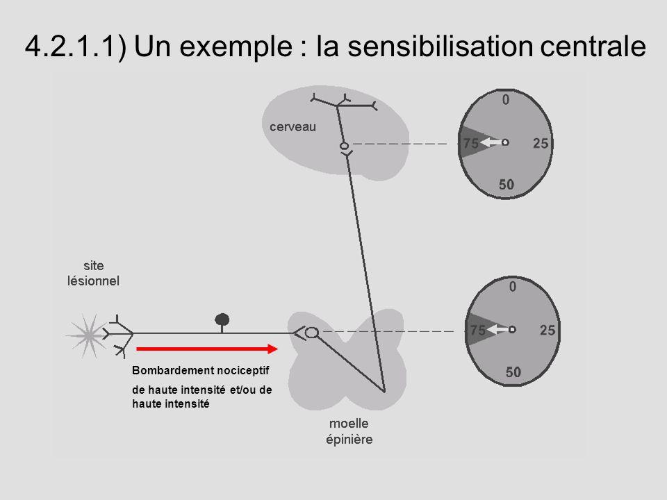 Bombardement nociceptif de haute intensité et/ou de haute intensité 4.2.1.1) Un exemple : la sensibilisation centrale