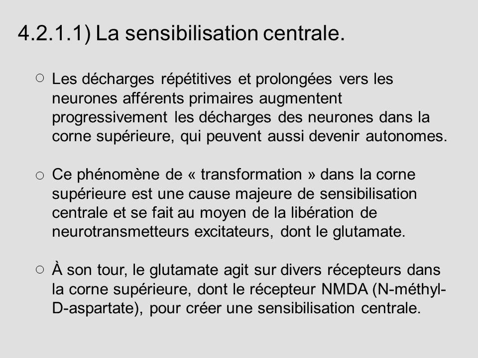 Les décharges répétitives et prolongées vers les neurones afférents primaires augmentent progressivement les décharges des neurones dans la corne supé