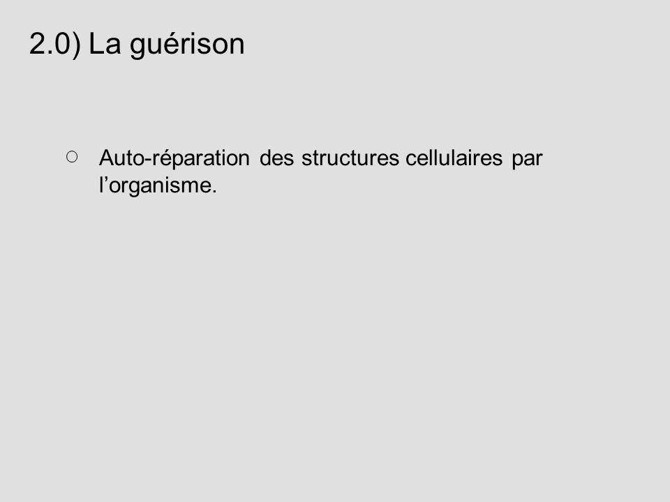 2.0) La guérison Auto-réparation des structures cellulaires par lorganisme.