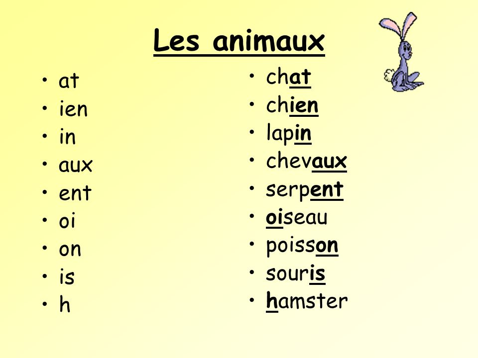 Les animaux at ien in aux ent oi on is h chat chien lapin chevaux serpent oiseau poisson souris hamster