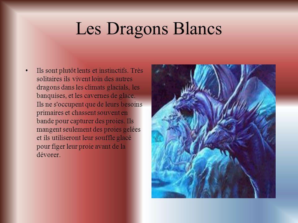 Les Dragons Blancs Ils sont plutôt lents et instinctifs.