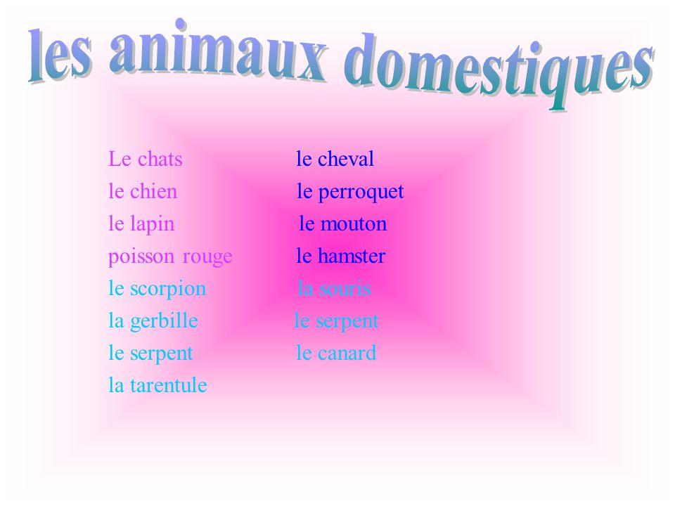 Le hamster est une boule de poils très douce,très agile, et toujours très propre.