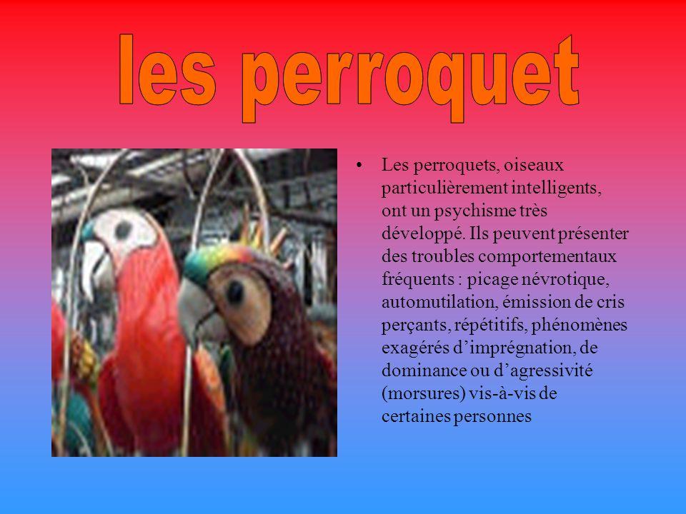 Les perroquets, oiseaux particulièrement intelligents, ont un psychisme très développé.