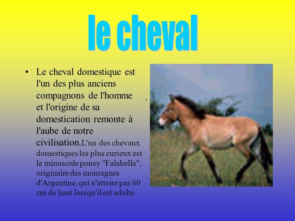Le cheval domestique est l un des plus anciens compagnons de l homme et l origine de sa domestication remonte à l aube de notre civilisation.