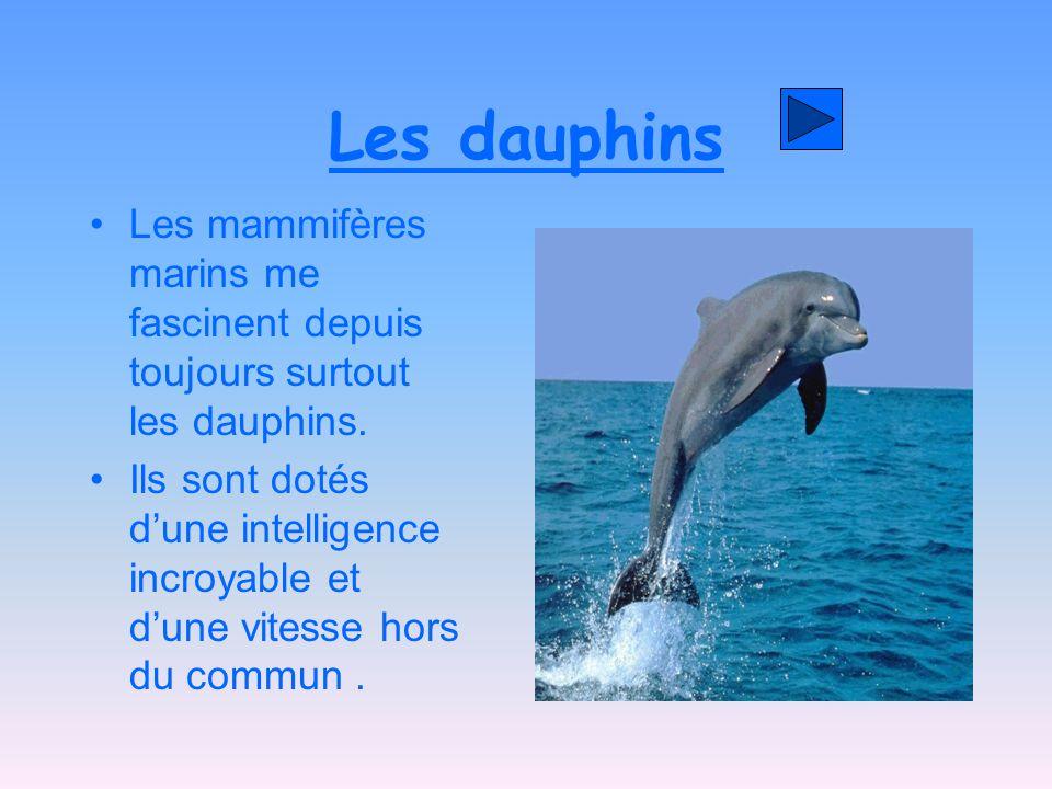 Les dauphins Les mammifères marins me fascinent depuis toujours surtout les dauphins.