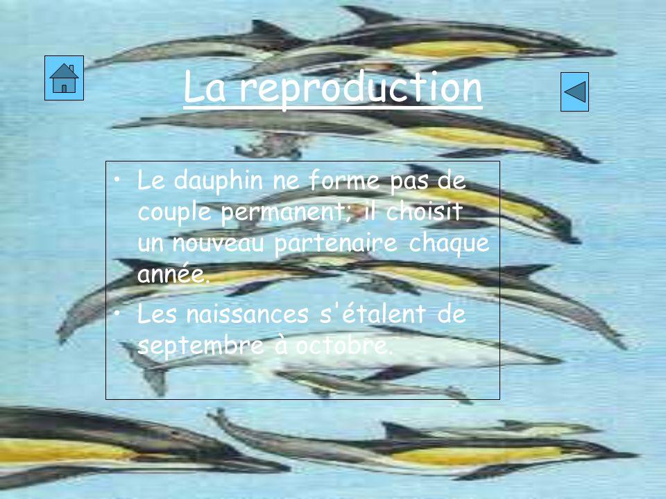 La reproduction Le dauphin ne forme pas de couple permanent; il choisit un nouveau partenaire chaque année.