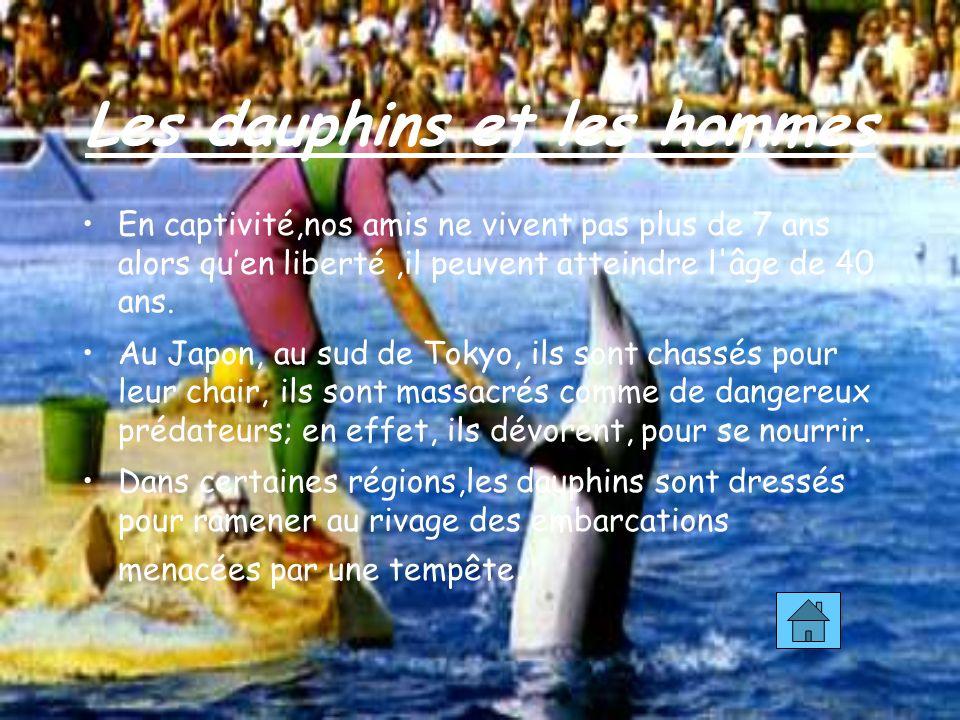 Les dauphins et les hommes En captivité,nos amis ne vivent pas plus de 7 ans alors quen liberté,il peuvent atteindre l âge de 40 ans.