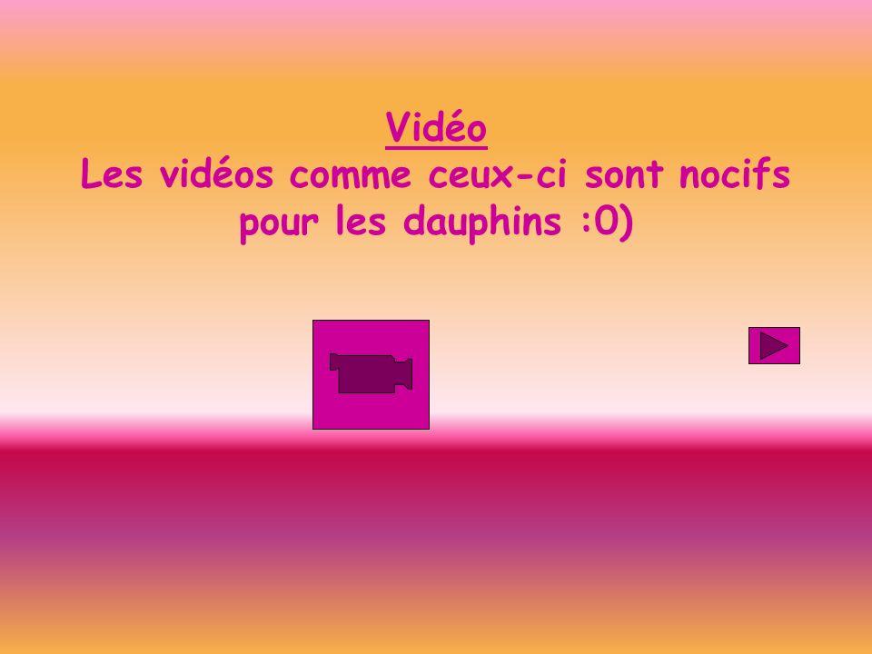 Vidéo Les vidéos comme ceux-ci sont nocifs pour les dauphins :0)