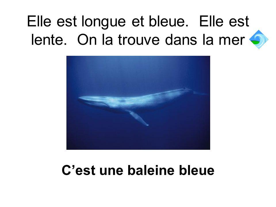 Elle est longue et bleue. Elle est lente. On la trouve dans la mer Cest une baleine bleue