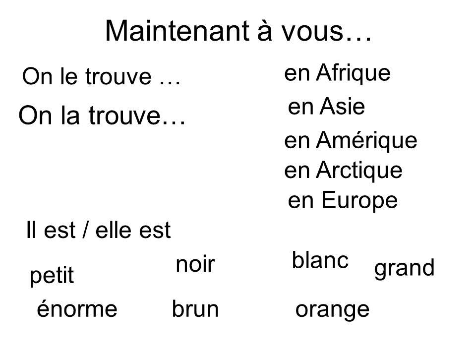 Maintenant à vous… On le trouve … On la trouve… en Afrique en Asie grand énorme petit brun blanc orange noir en Arctique en Europe en Amérique Il est