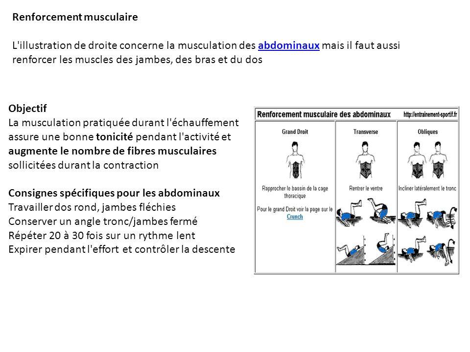 Renforcement musculaire L'illustration de droite concerne la musculation des abdominaux mais il faut aussi renforcer les muscles des jambes, des bras