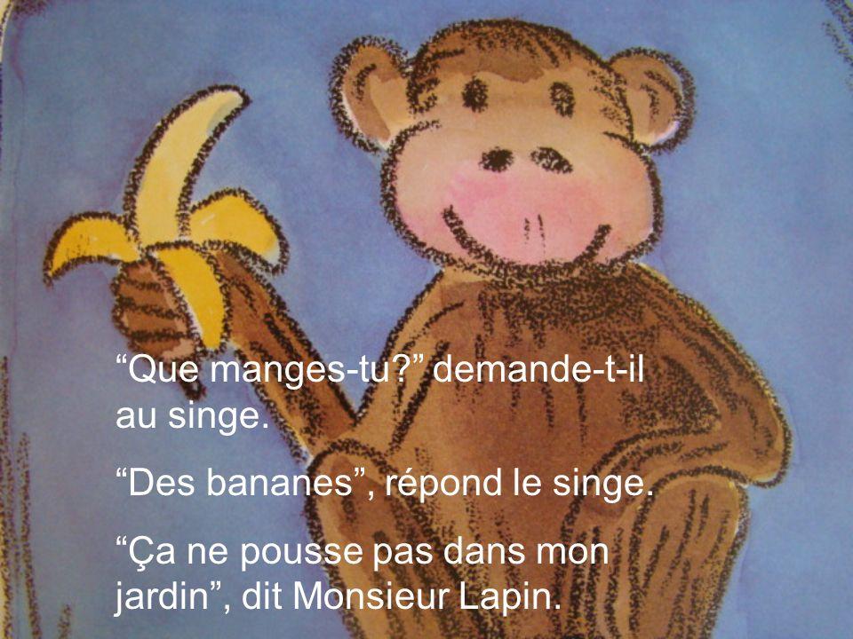 Que manges-tu? demande-t-il au singe. Des bananes, répond le singe. Ça ne pousse pas dans mon jardin, dit Monsieur Lapin.