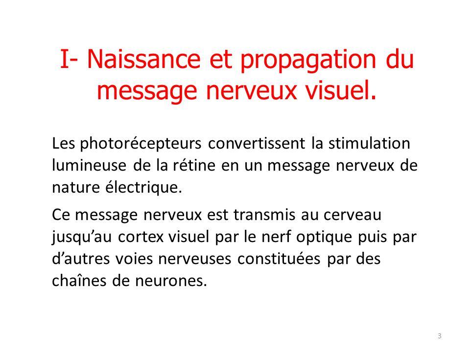3 I- Naissance et propagation du message nerveux visuel. Les photorécepteurs convertissent la stimulation lumineuse de la rétine en un message nerveux